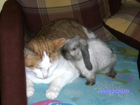 Emy von den Sunny-Bunnys