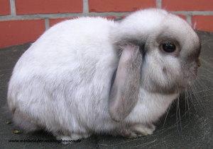 10.04.2010 Fred von den Sunny-Bunnys